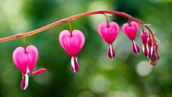 Vaste planten, vroege bloei