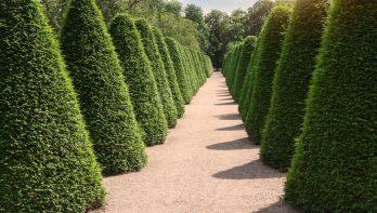 Bomen in zuilvorm