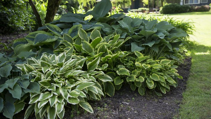Spiksplinternieuw Schaduwplanten in de tuin - Tuinen LT-37