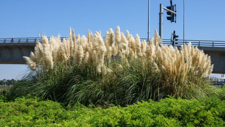 Grassen In Pot.Siergrassen Op Balkon En Terras Tuinen