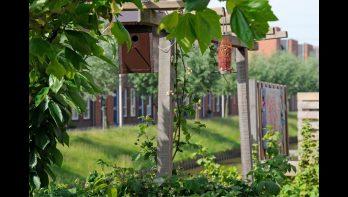 Milieubewust tuinieren is niet moeilijk