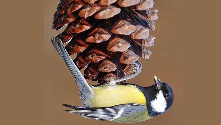 DIY: kerstmenu voor vogels