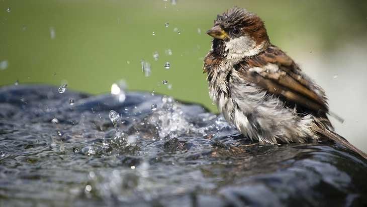 Help de vogels de hitte door