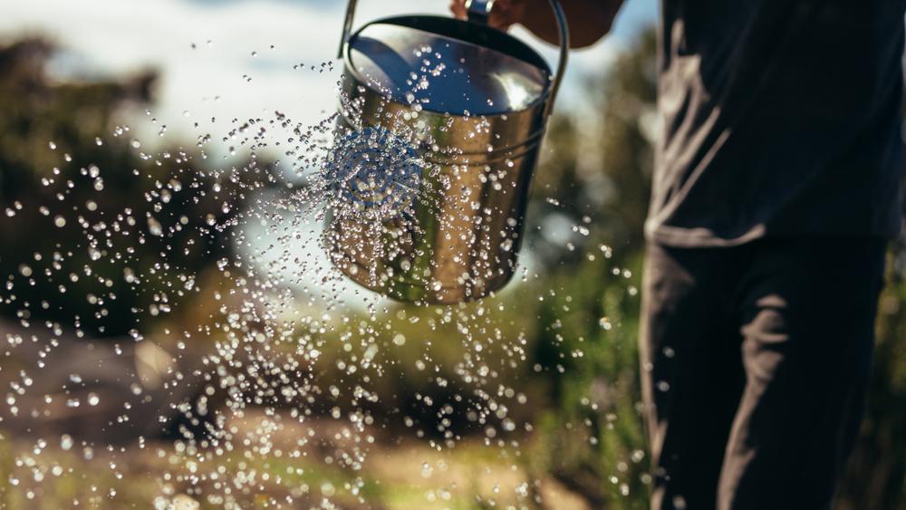 moestuin, gieter, water geven, planten, moestuinkalender
