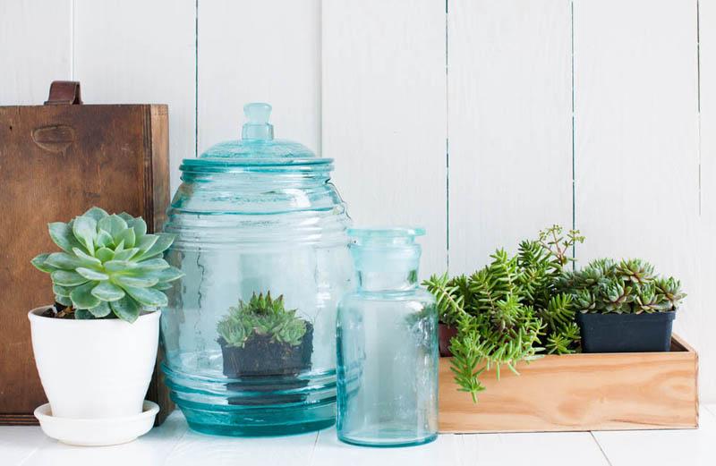 succulenten, cactus, vetplanten, tuinen.nl