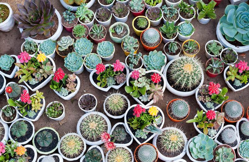 succulenten, vetplant, cactus, tuinen.nl