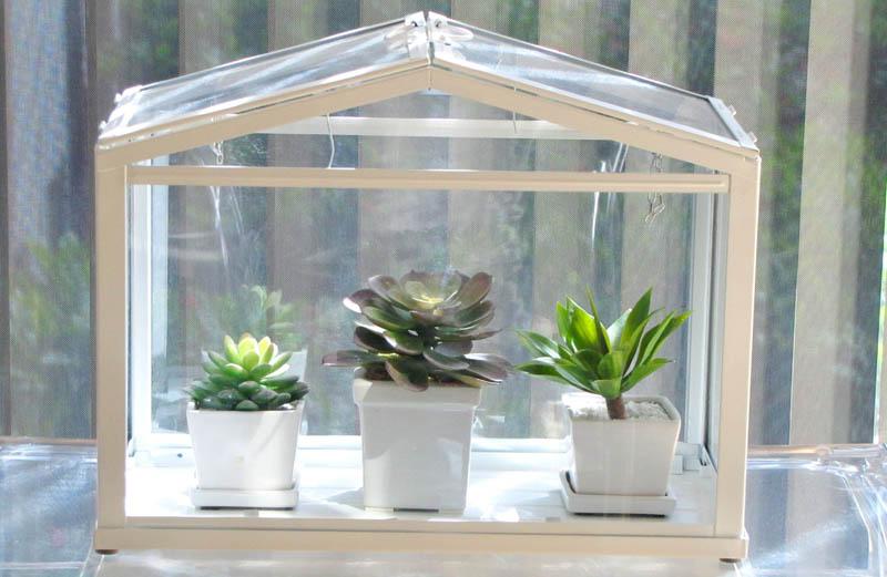 succulenten, kweekkas, vetplant, cactus, tuinen.nl