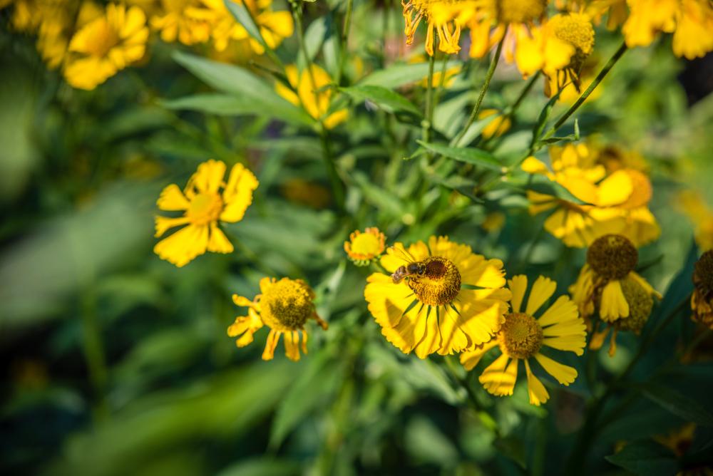 bijen, tuin, bij, nectar, bloemen, stuifmeel