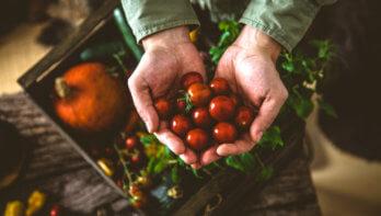 Fruit oogsten uit eigen tuin