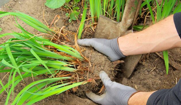 Vaste planten vermeerderen