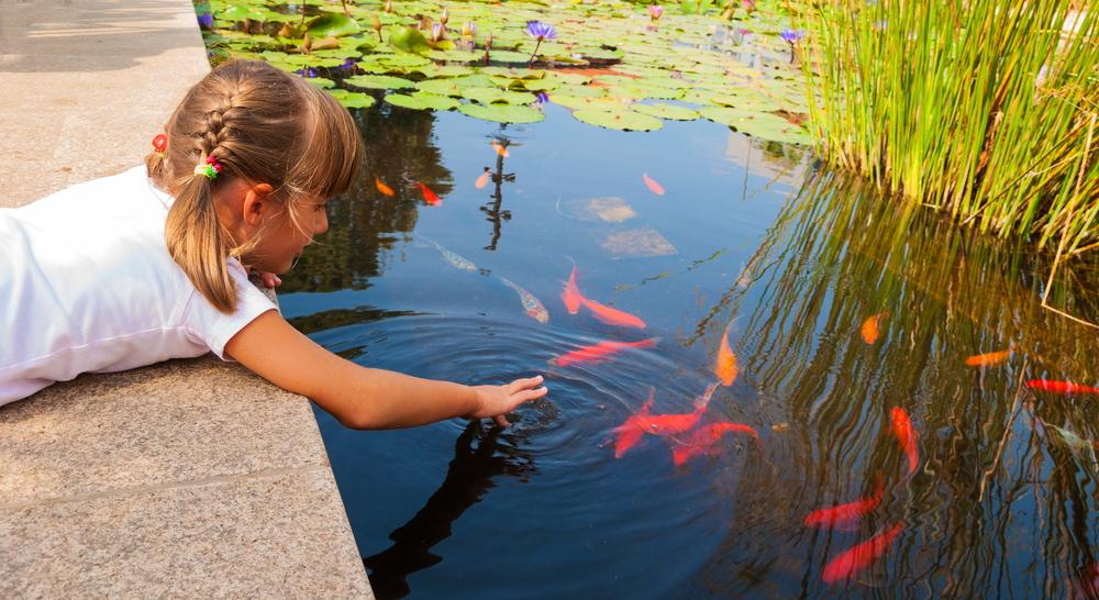 vijver in april, vissen, vijver, vijverkalender, tuinen.nl