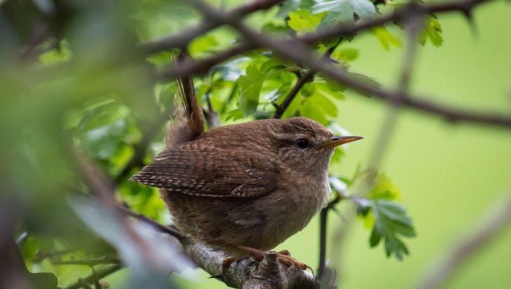 Bijzondere vogels in de tuin