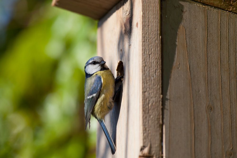 Vogel, nestkastje, pimpelmees, nest, broeden, tuinen.nl
