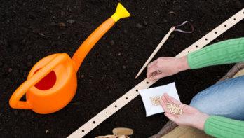 Groenten kweken in de tuin