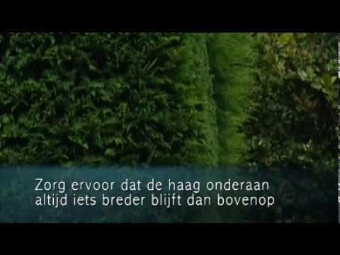 Video coniferenhaag snoeien in juli en september