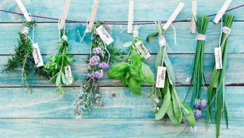 Tuinkruiden lekker, gezond en decoratief