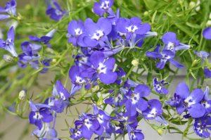 viooltjes, paars, bloemen, lente, zomer