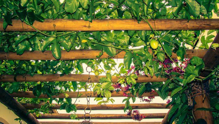 Vruchtbomen en -struiken in de tuin