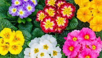 Kleurrijk: gebruik van kleur in de tuin