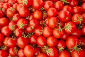 tomaten, oogsten, moestuin, groenten