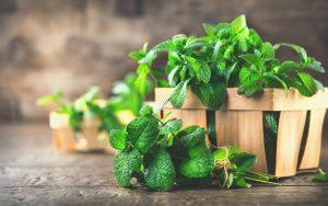 munt, plant