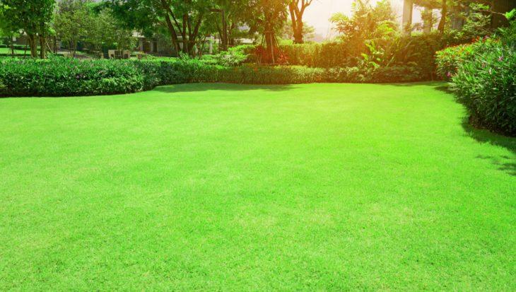 Gemaaid gras
