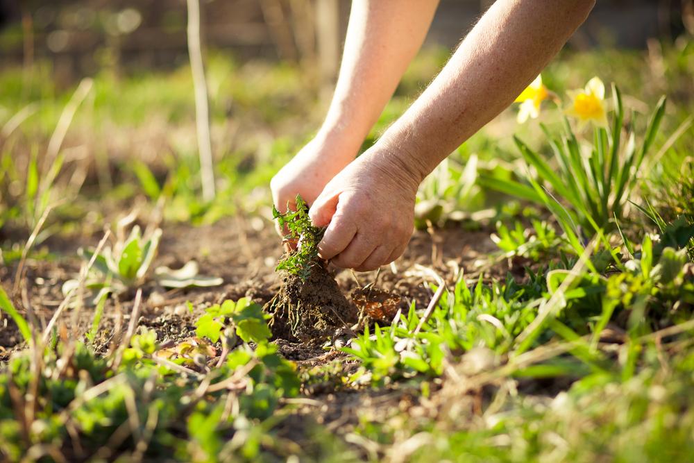 onkruid, onkruid verwijderen, tuin, lenteklaar, tuinen.nl