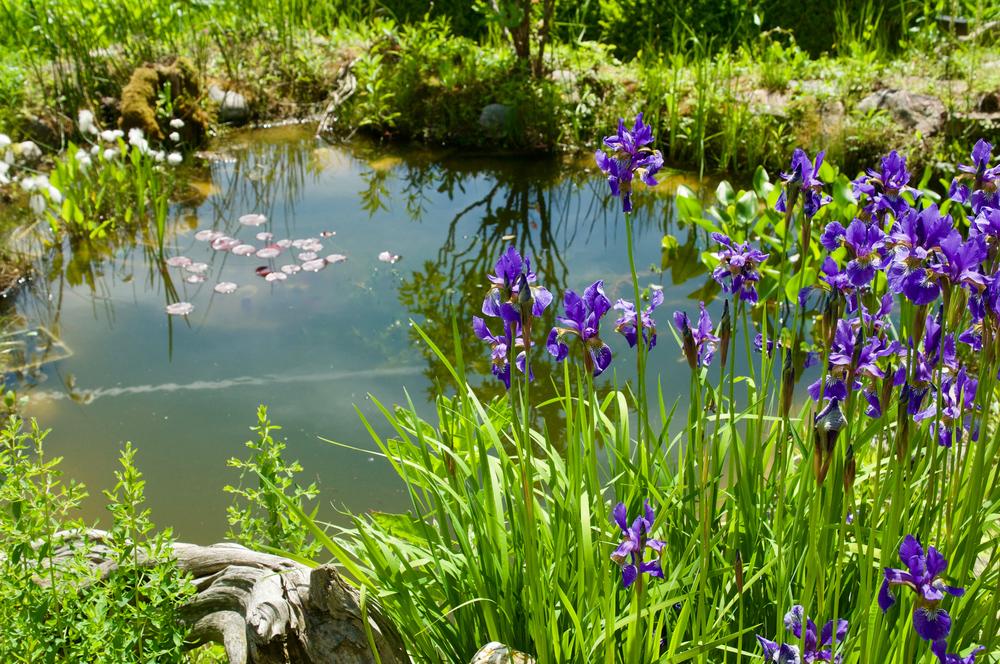 vijver, lenteklaar, lente, tuinen.nl