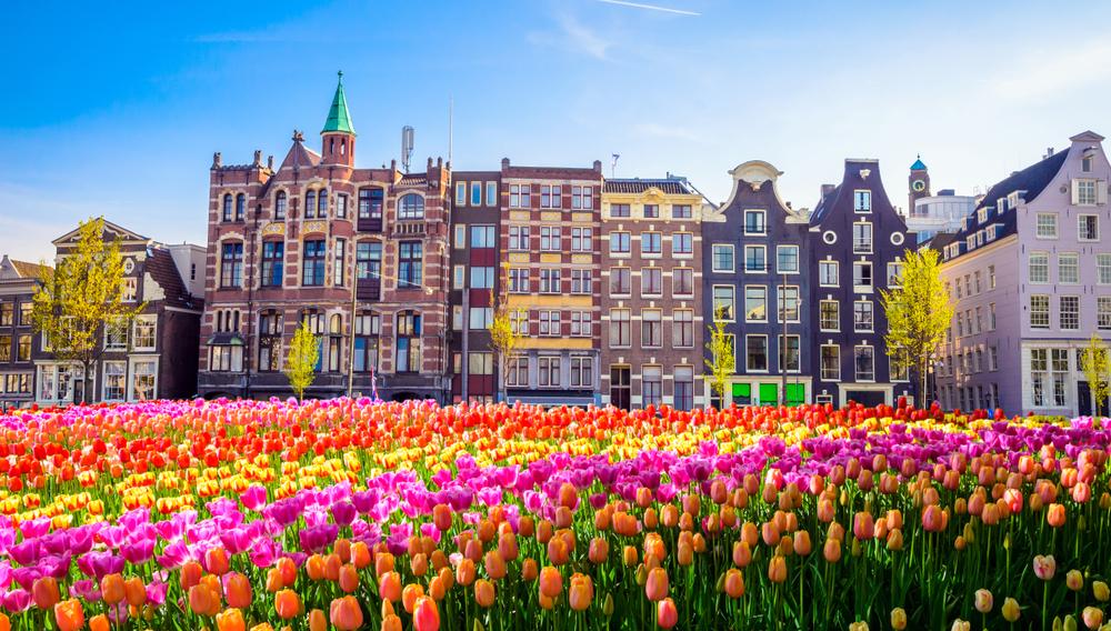 tulp, tulpen, amsterdam, voorjaar, tuinen.nl