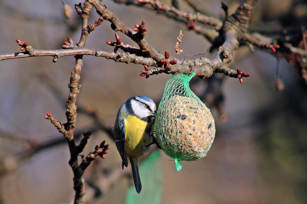 Vogel, voer, vetbol