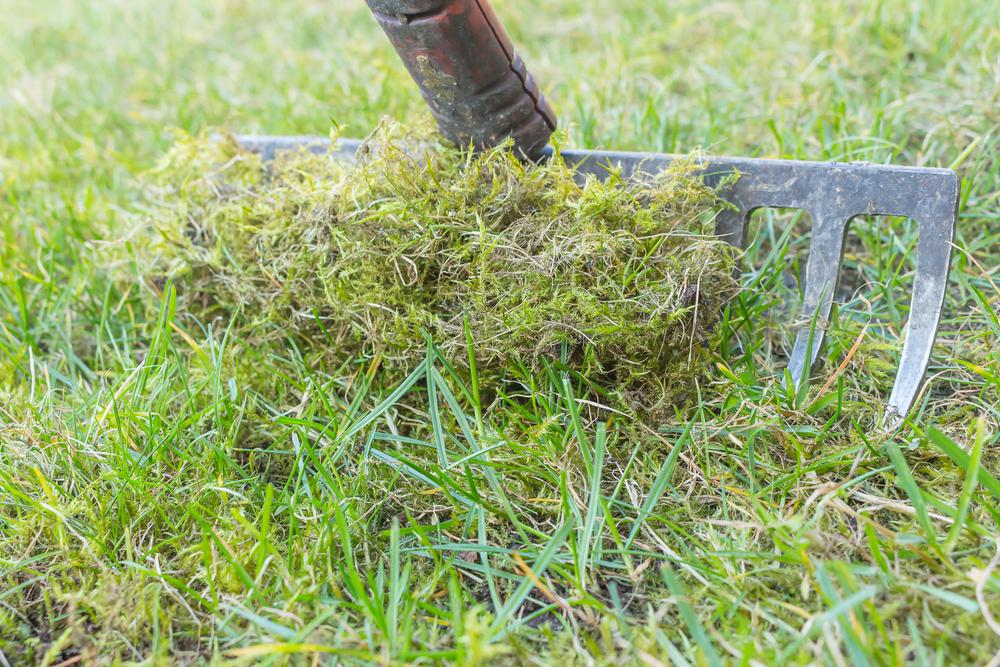 mos weghalen, mos, tuin, gras, gazon, tuinen.nl