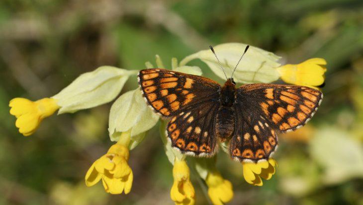 Vlinders in oktober