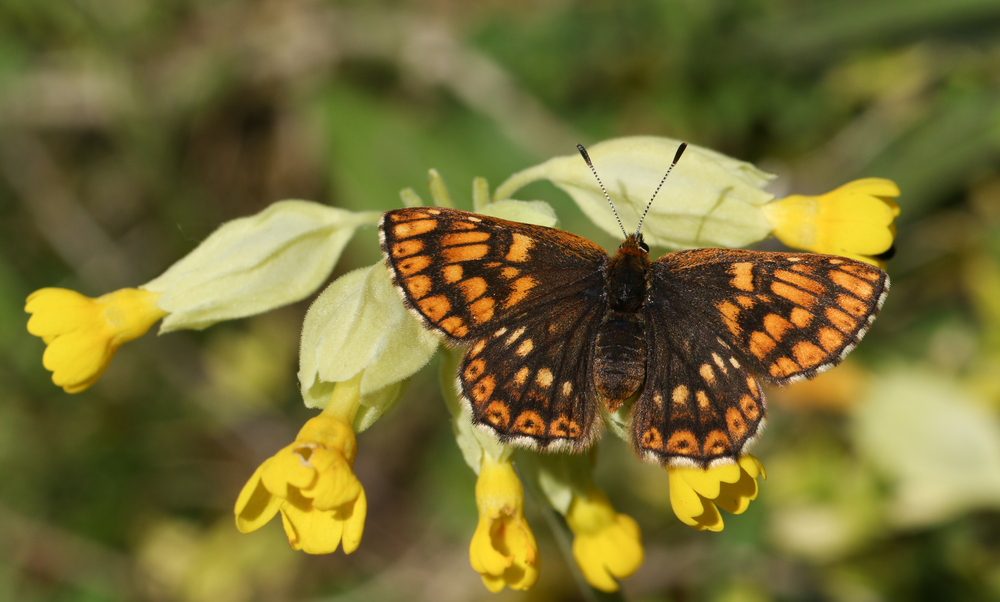 Vlinders, vlinderlokkende planten