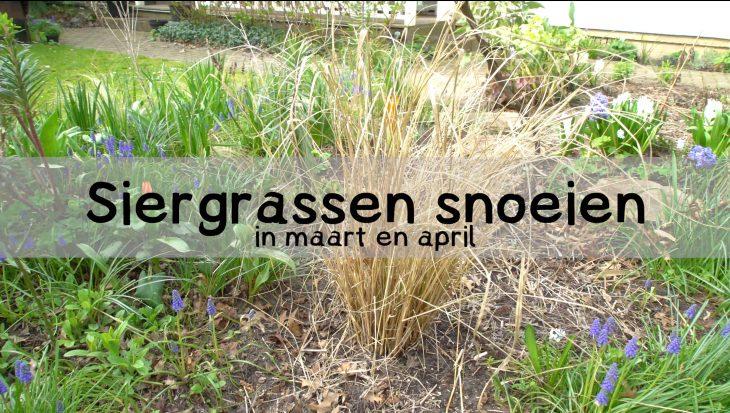 Video siergras snoeien in maart en april