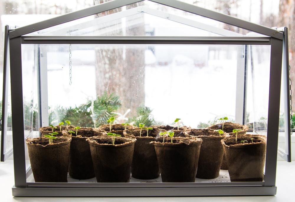 kweekkasje, planten stekken, tuinen.nl