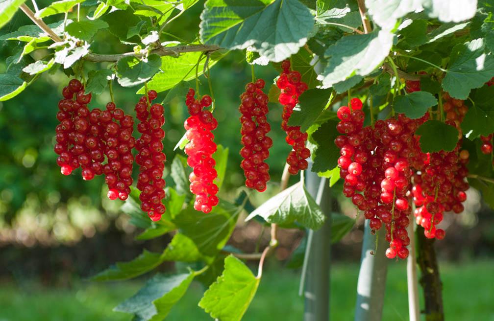 Boom In Pot Op Balkon.Fruitbomen In De Tuin En Op Het Terras Tuinen