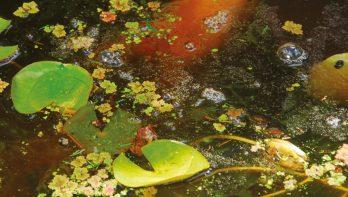 Waterplanten planten
