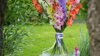 Gekleurde zomerbloemen