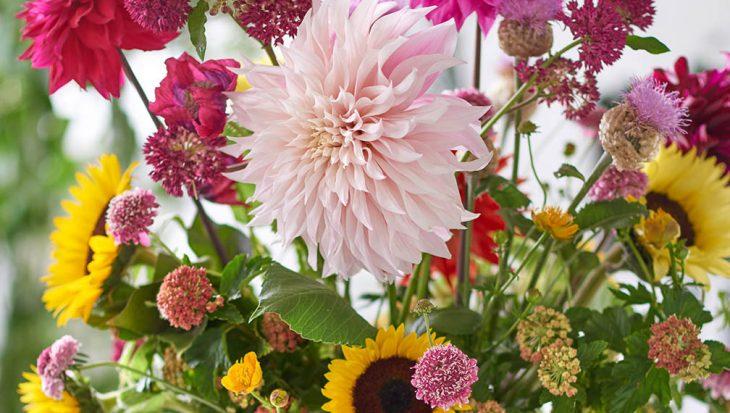 Romantische bloemen in je tuin
