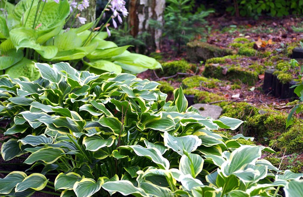 Planten Voor In De Schaduw.Schaduwplanten Op Droge Grond Tuinen