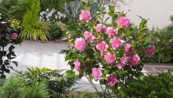 De vroegste bloeiers