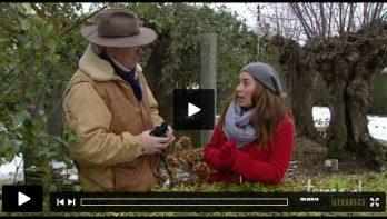 Tuinvideo: Kleur in de wintertuin