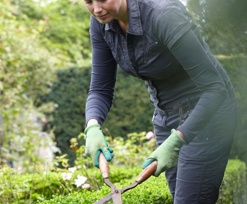 Tuin Hagen Soorten : Verschillende soorten hagen tuinen