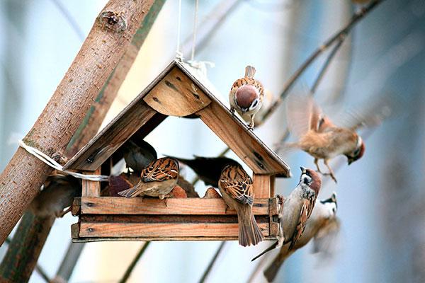 Nestkasten vogels