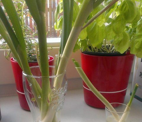 Hergebruik groenten: Lente-ui