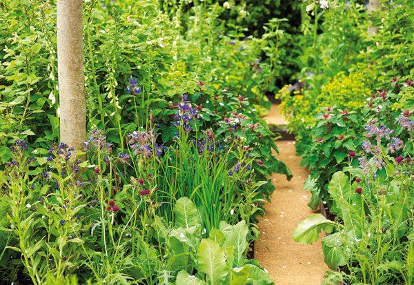 Een natuurlijke tuin met de Biotope Garden
