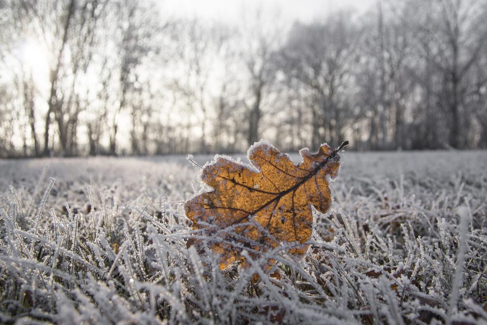 Bevroren gazon, gazon, gras, vorst, sneeuw,
