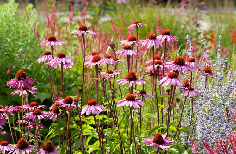 Planten Voor Bijen.Bijenvriendelijke Tuin Dankzij Bijzondere Tips Tuinen