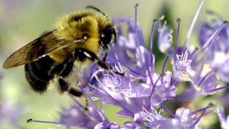 Bijen zijn belangrijk voor de tuin