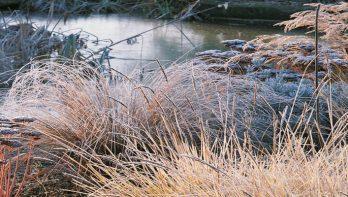 Tuinkalender december